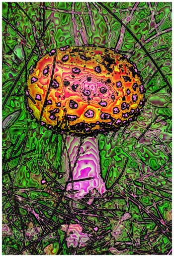 Mushroom: Green, Filter Size 17, Color Shift None, Edge Tracing Black, Edge Threshold 85