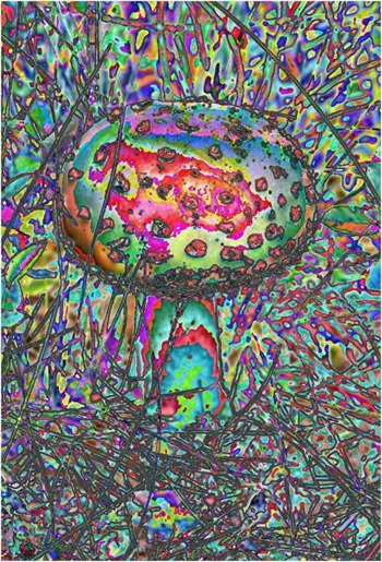 Mushroom: Red - Green - Blue, Filter Size 5, Color Shift None, Edge Tracing Half Edge, Threshold 85