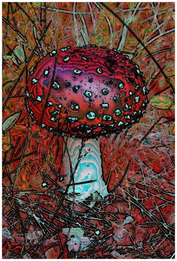 Mushroom: Red, Filter Size 17, Color Shift None, Edge Tracing Black, Edge Threshold 85