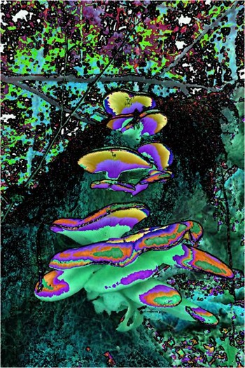 Mushroom: Red - Green - Blue, Filter Size 3, Color Shift Left, Edge Tracing Black, Edge Threshold 75