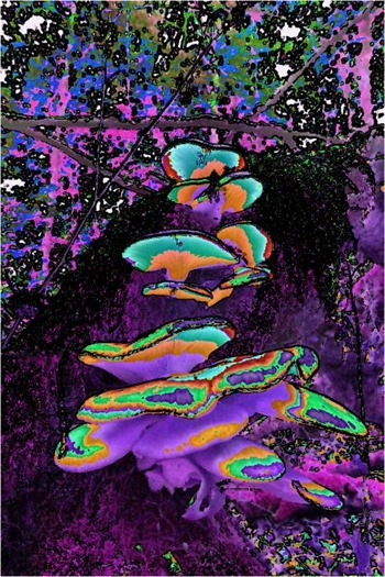 Mushroom: Red - Green - Blue, Filter Size 3, Color Shift Right, Edge Tracing Black, Edge Threshold 75