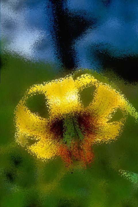 Flower: Distortion Factor 25