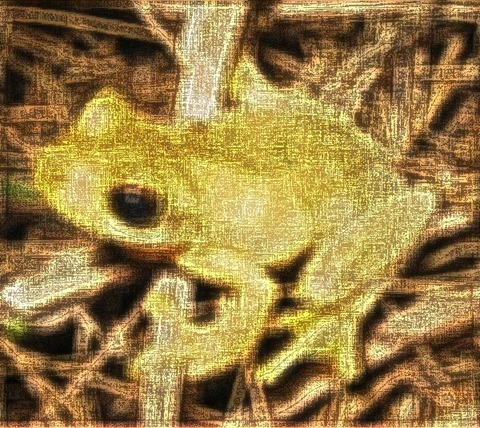 Frog: Filter Size 19x19