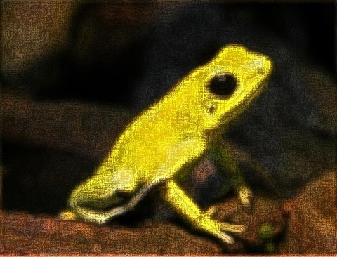 Frog: Filter Size 13x13