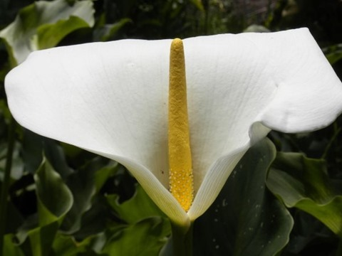White_and_yellow_flower