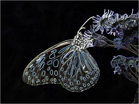Butterfly Filter 3x3 Factor 4