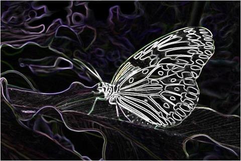 Butterfly Filter 3x3 Factor 4.5