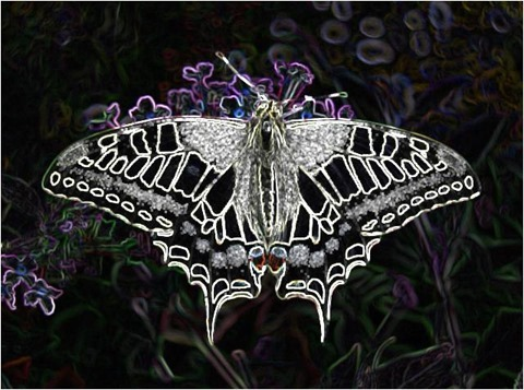 Butterfly Filter 3x3 Factor 5