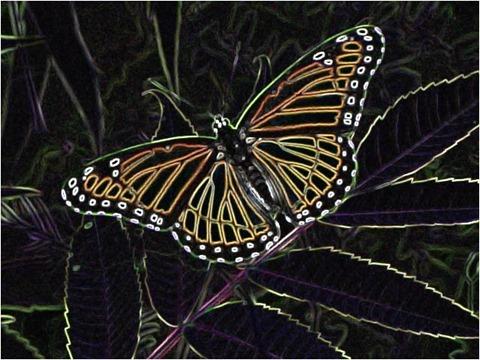 Butterfly Filter 3x3 Factor 5.0