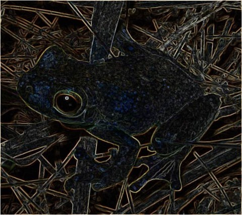 Frog Filter 3x3 Smoothed